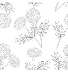 Marigold on white background vector