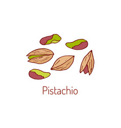 Pistachio nut hand drawn vector
