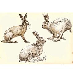 Studies rabbit hare in motion vector