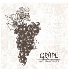 Digital detailed grape hand drawn vector