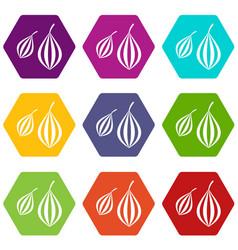 Trachyspermum ammi icon set color hexahedron vector