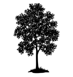 Maple tree and grass silhouette vector