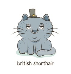 British shorthair cat character isolated on white vector