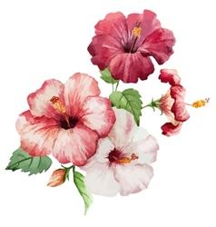 Hibiscus2 vector