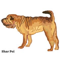 colored decorative standing portrait of shar pei vector image