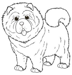 doodle animal for chow chow dog vector image vector image