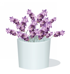 Lavender flowers in a white pot vector