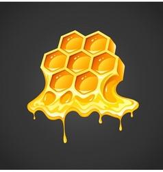 Honey in honeycombs vector