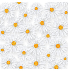 Chamomile summer flower background camomile vector