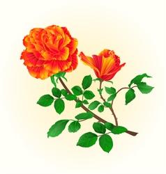 Flower orange rose with bud vintage vector