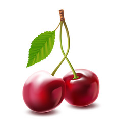 image cherries isolated on white background vector image vector image