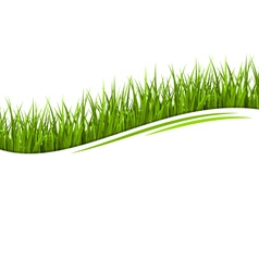 Green grass lawn wave isolated on white floral eco vector