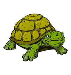 cartoon image of turtle vector image