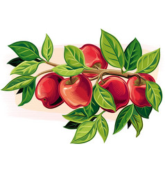 Branch with some ripe apples vector