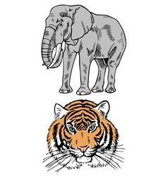 elephant and tiger vector image vector image
