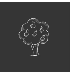 Fruit tree drawn in chalk icon vector