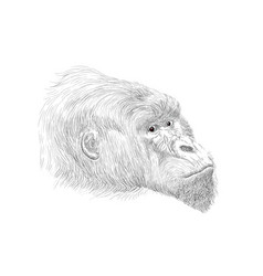 Gorilla face side drawing vector