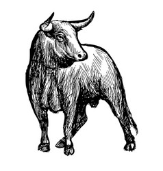 Freehand sketch of bull vector