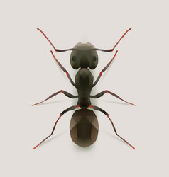 ant vector image vector image