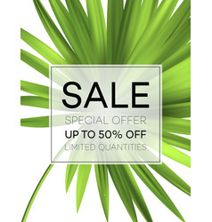 sale banner or poster with palm leaves and jungle vector image