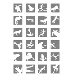 Icons of reptiles and amphibians vector image