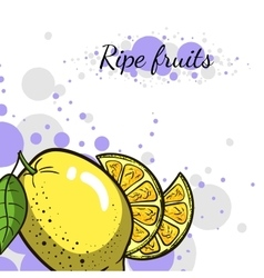 Cover Juicy Lemon vector image