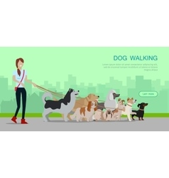 Dog walking banner woman walk with different dogs vector