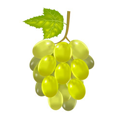 Realistic detailed green bunch of grapes vector