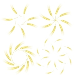 Yellow ears of wheat icon set vector