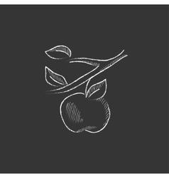 Apple harvest drawn in chalk icon vector