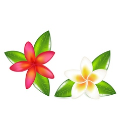 Fragipani with leaves vector