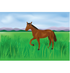 The wild brown horse grazes on the meadow vector