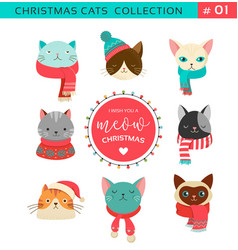 merry christmas with cute cats characters vector image