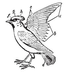 Plumage of bird vintage vector