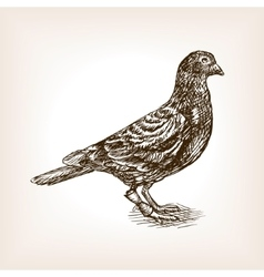 Post pigeon sketch vector