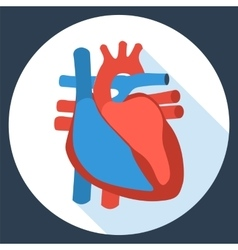 Flat design icon of anatomy of human heart vector