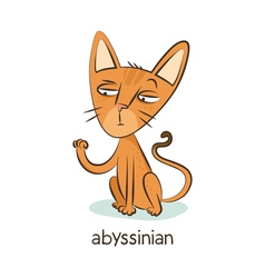 Abyssinian cat character isolated on white vector