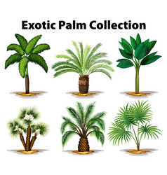 different types of exotic palm trees vector image