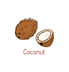 Coconut hand drawn vector