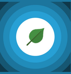 Isolated alder flat icon linden element vector