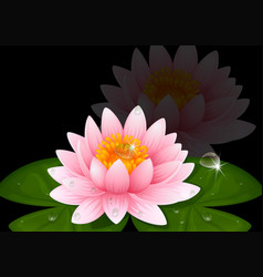 Pink water lily on black background vector