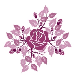 Rose flourishes vector
