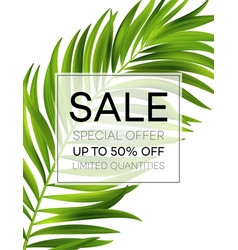 Sale banner or poster with palm leaves and jungle vector