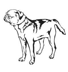 decorative standing portrait of petit brabant vector image