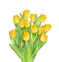 Bunch of tulips EPS 10 vector image