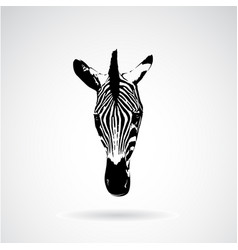 Zebra face on white background wild animals vector