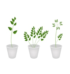 Beautiful green ferns in tree flower pots vector