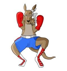 Boxing kangaroo vector