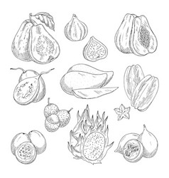 Exotic fruits sketch isolated icons vector