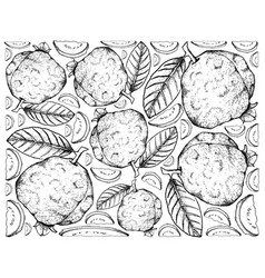 Hand drawn background of fresh guava fruits vector